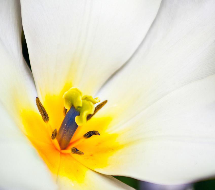 fiore_bianco